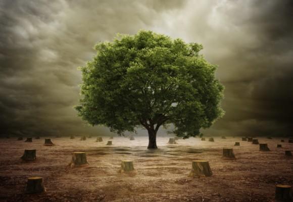 Overshoot Day: ecco come risparmiare le risorse della Terra