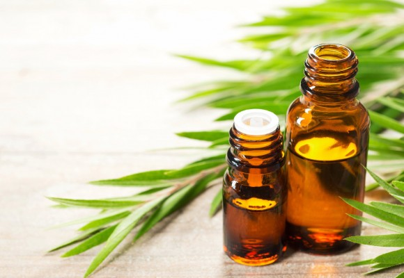 Tea Tree Oil: proprietà, modo d'uso e precauzioni dell'olio essenziale di melaleuca